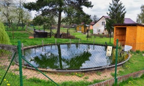 školní rybníček s rybami